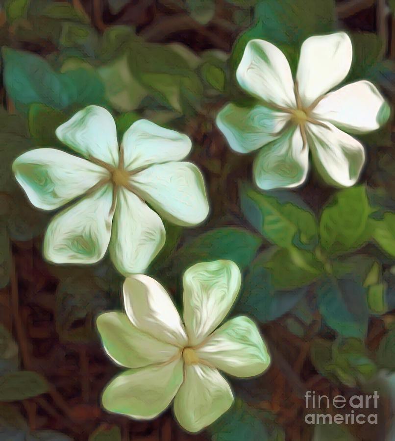 Gardenia Canvas by Irene Dowdy