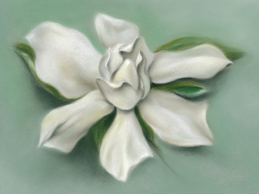 Gardenia Flower by MM Anderson