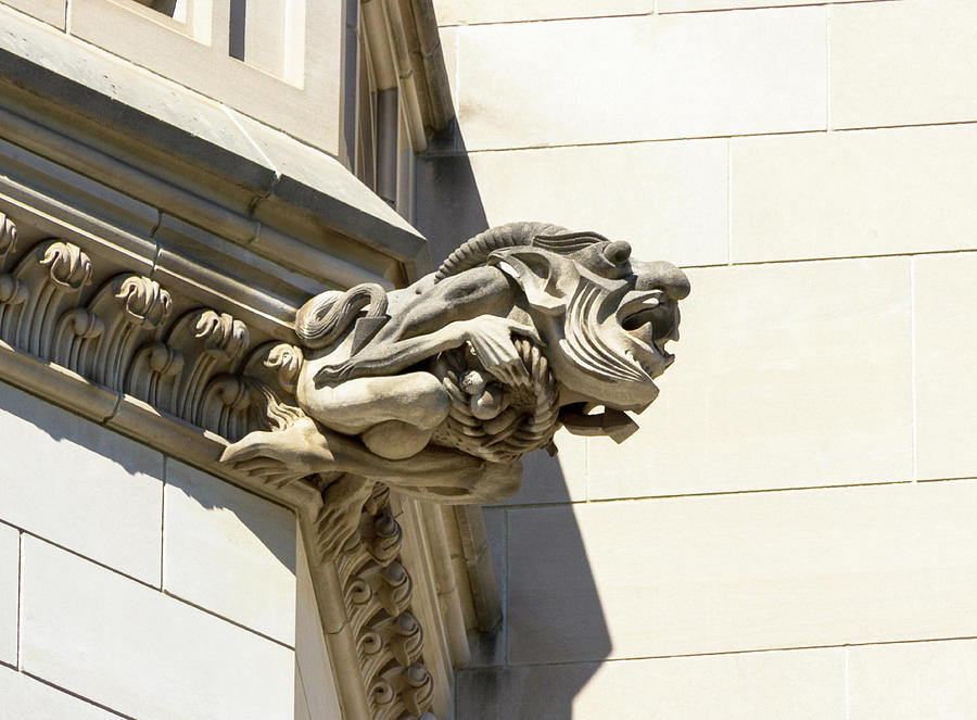 Gargoyle with Pointy Ears by Amy Sorvillo
