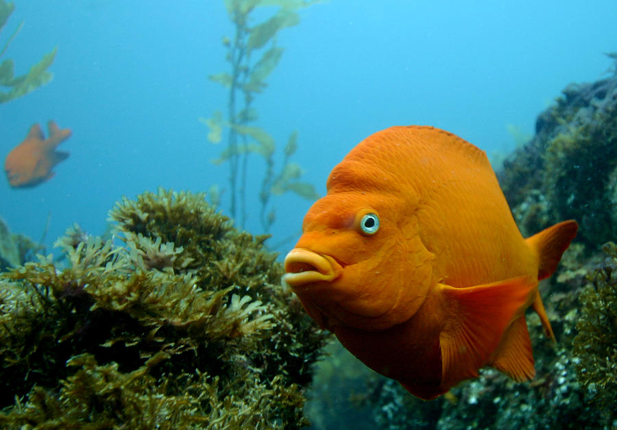 Gari Fish Photograph by Douglas Klug