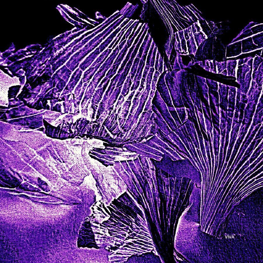 Garlic Peel  Purple on  Black  -  Series by VIVA Anderson