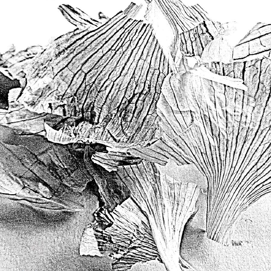 Garlic Series - B  -  W by VIVA Anderson