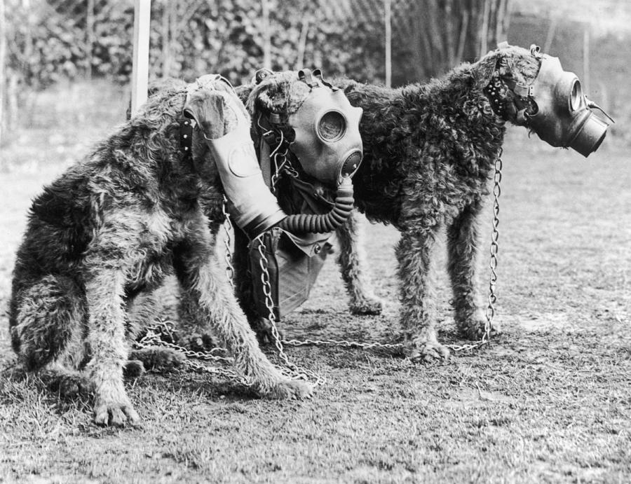 Gas Masks For Dogs Photograph by Keystone