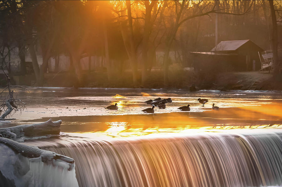 Geese at Rest by James Meyer