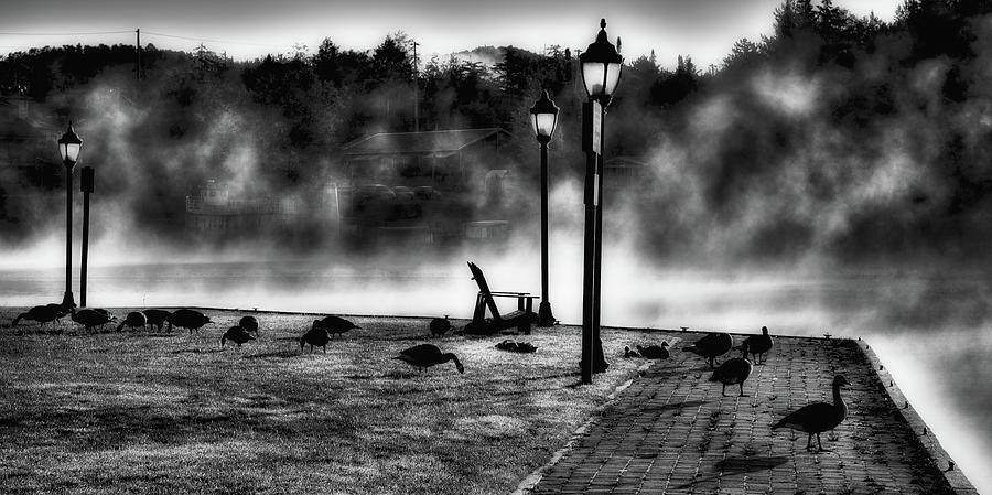 Geese in the Mist by David Patterson