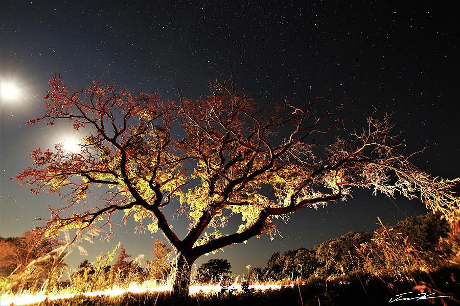 Geminate Moon by Tim Kuret
