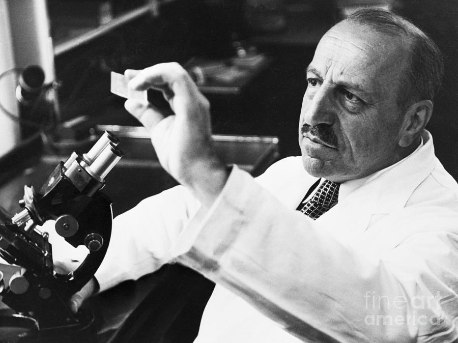 George Papanicolaou Examining A Slide Photograph by Bettmann