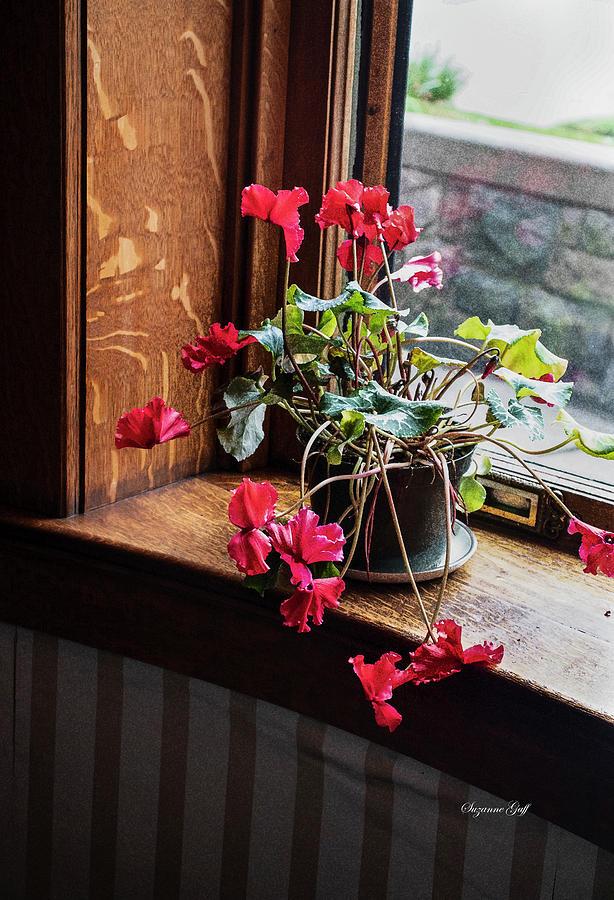 Geranium in the Window by Suzanne Gaff