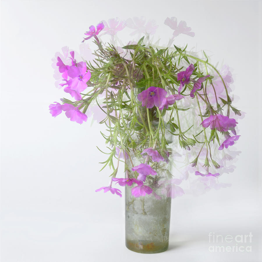 Geranium by Janet Burdon
