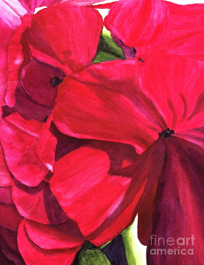 Geraniums by Bonnie Young