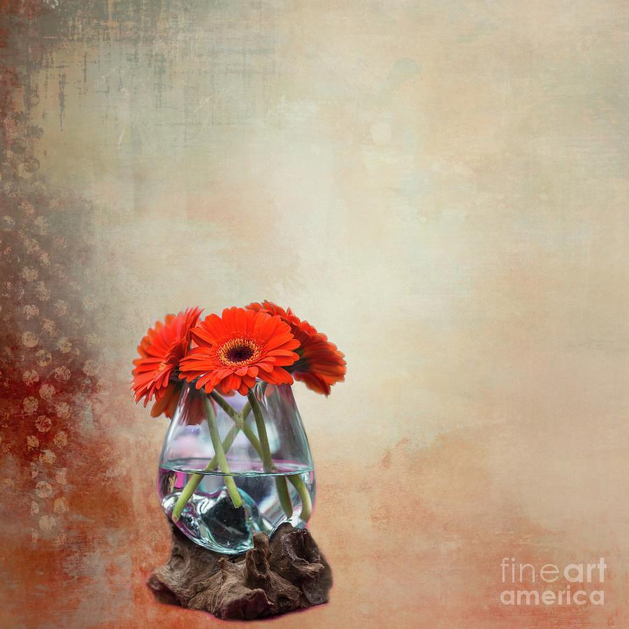 Gerbera Daisies-2 by Eva Lechner