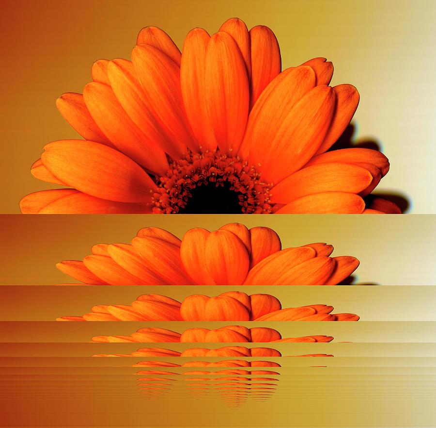 Gerbera Flower As Rising Sun Digital Art by Eversofine