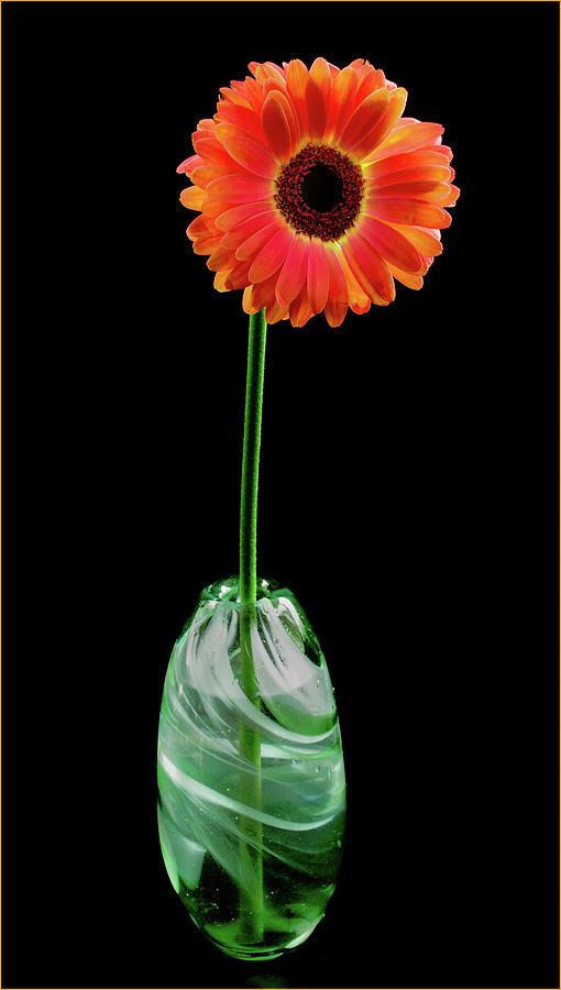 Gerbera in Green Glass Vase by Jean Noren