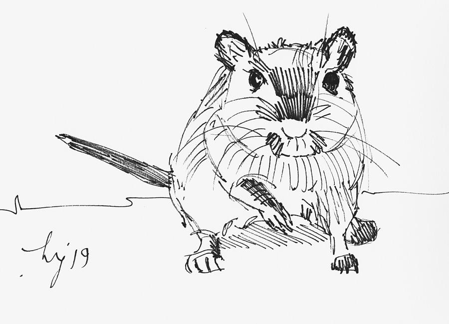 gerbil drawing by Mike Jory
