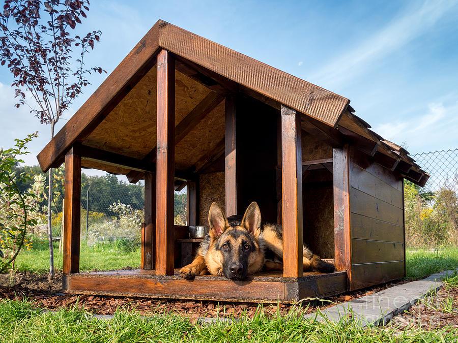 Yard Photograph - German Shepherd Resting In Its Wooden by Pryzmat