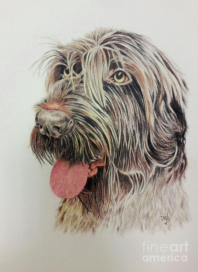 German Wire-haired Pointer by Terri Mills