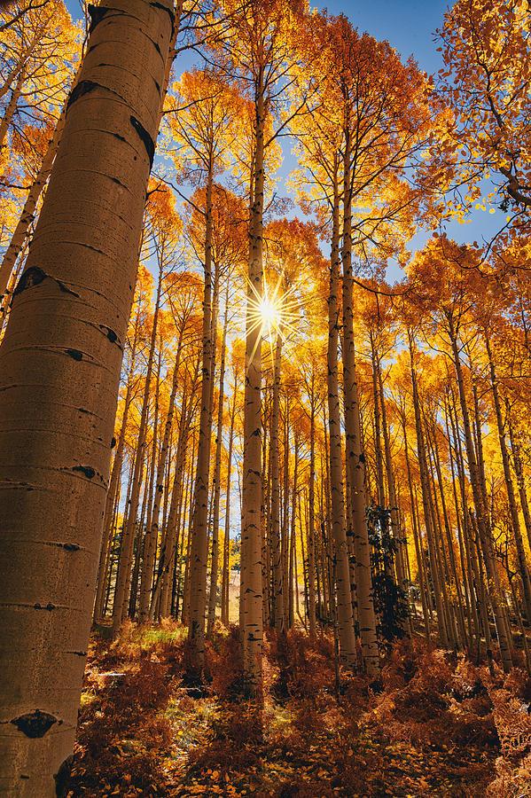 Getting Lost In A Fall Forest  by Saija Lehtonen