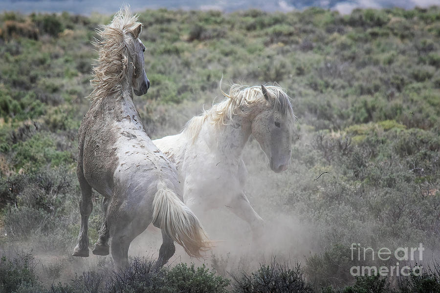 Ghost Dancers by Jim Garrison