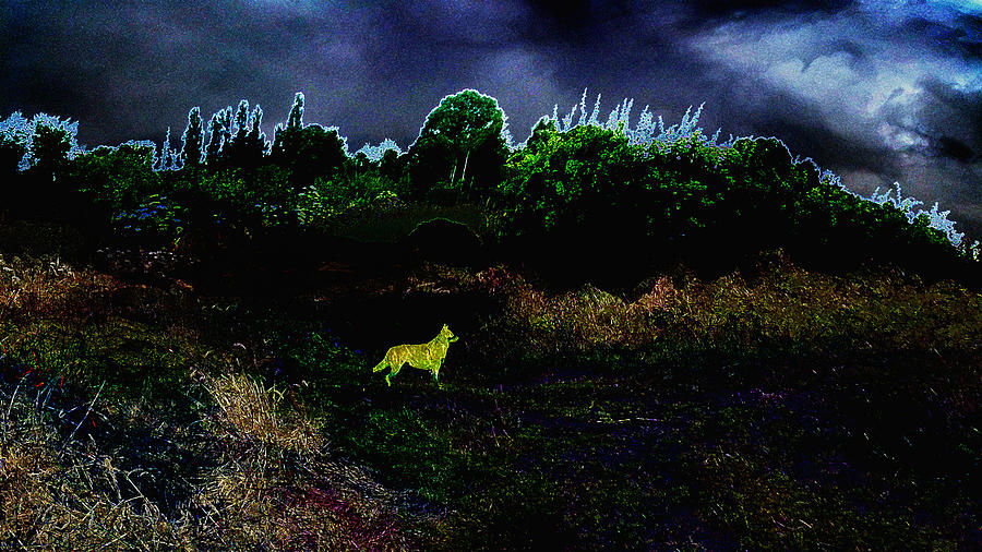 Ghost Dog by Stephanie Grant