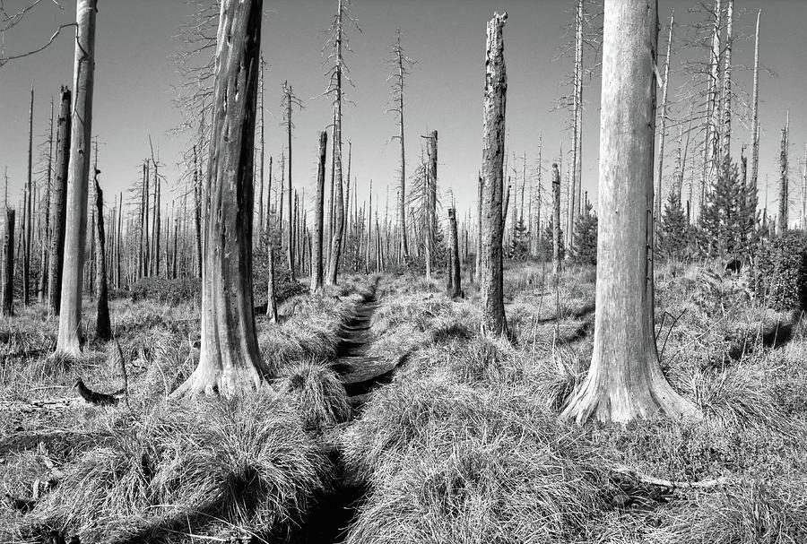 Landscape Photograph - Ghost Forest by David Patton