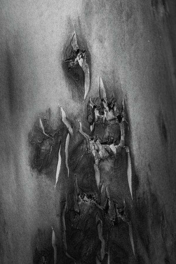 Ghost Abstract tree bark by Yulia Kazansky