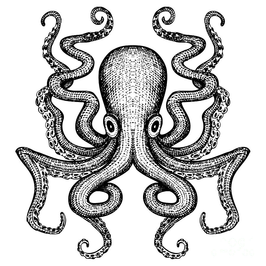 Etching Digital Art - Giant Octopus - Sea Monster by Iada