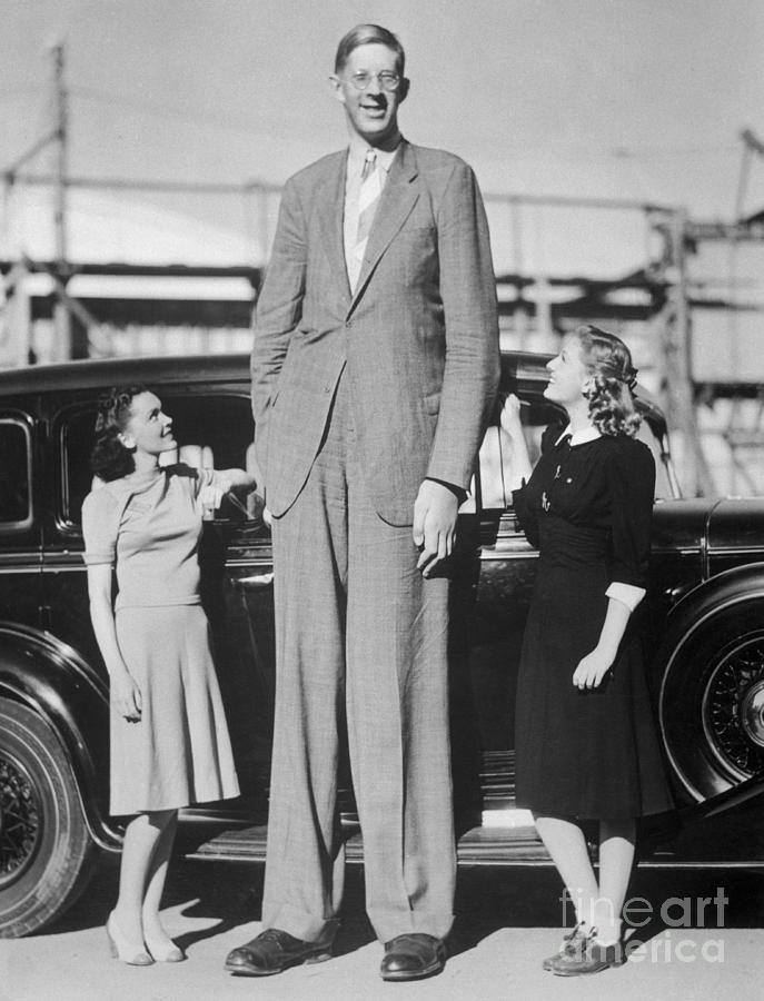 Giant Robert Wadlow With Actresses Photograph by Bettmann