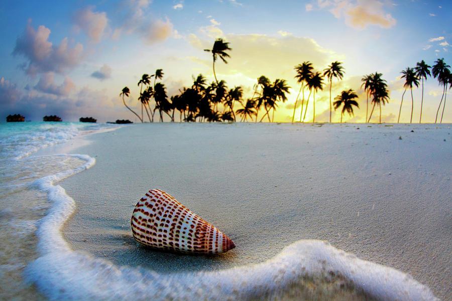 Seashell Photograph - Gili Shell by Sean Davey