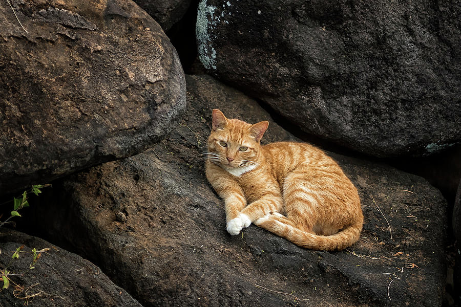 Ginger Cat on the Rocks by Belinda Greb