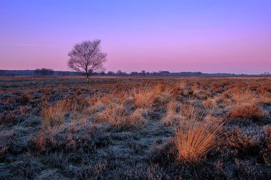 Ginkelse heide by Mario Visser