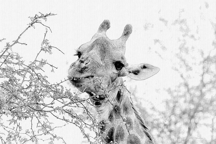 Giraffe 195 - Sketch by Ericamaxine Price