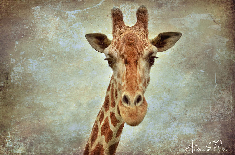 Giraffe by Andrea Platt