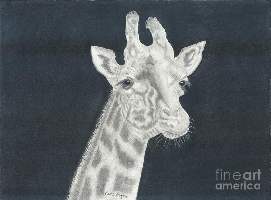 Giraffe by Carol Morris
