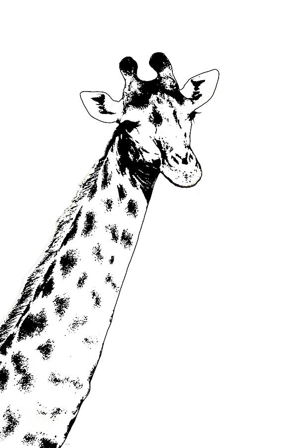 Giraffe In Black and White by Ramona Murdock
