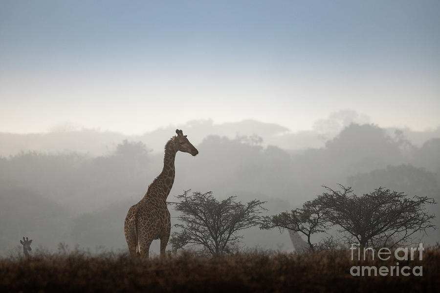 Giraffe in the Mist by Jamie Pham