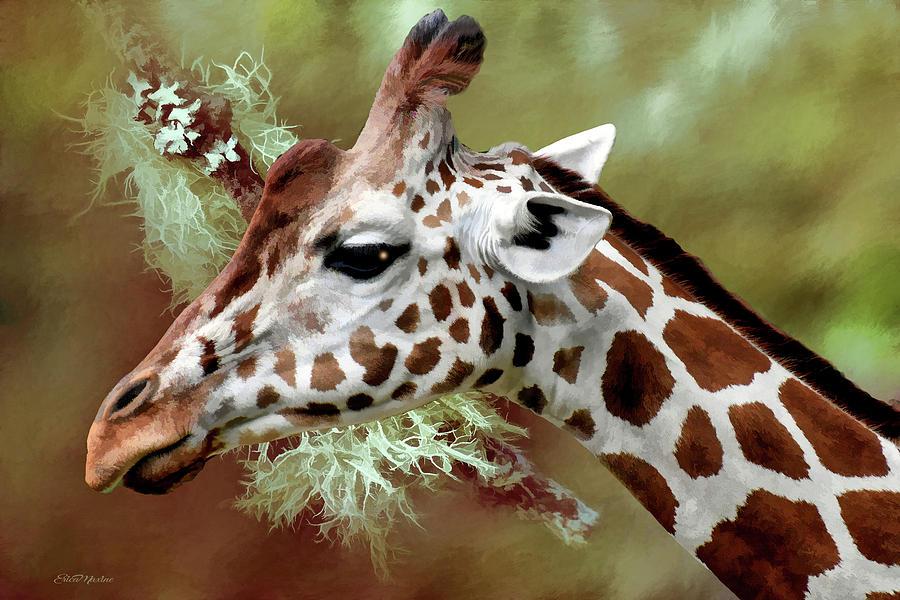 Painting Painting - Giraffe Profile - Painting by Ericamaxine Price