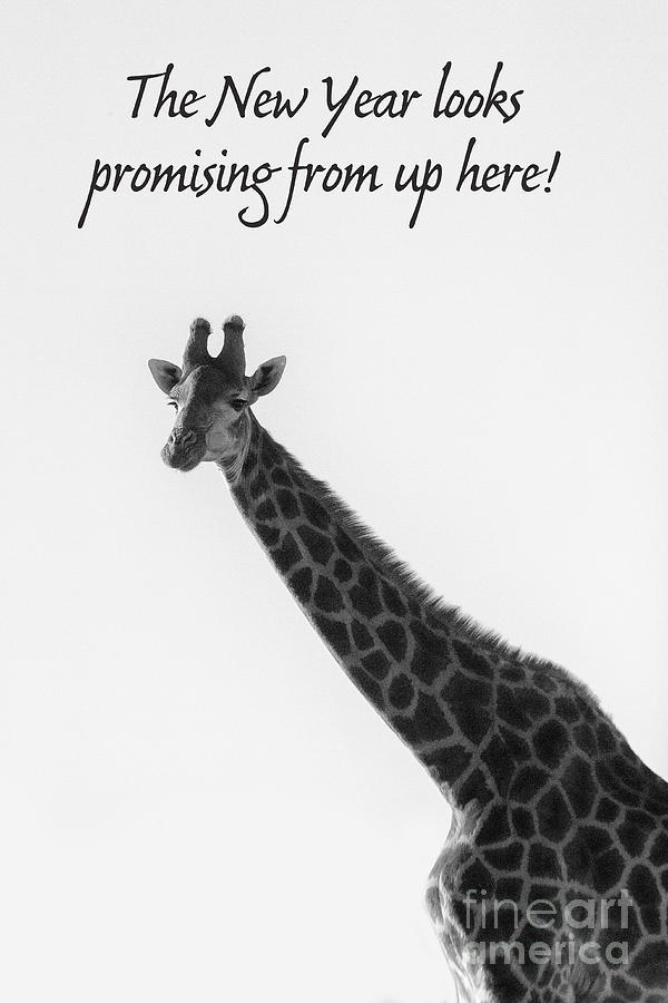 Giraffe with New Years Eve text by Patricia Hofmeester