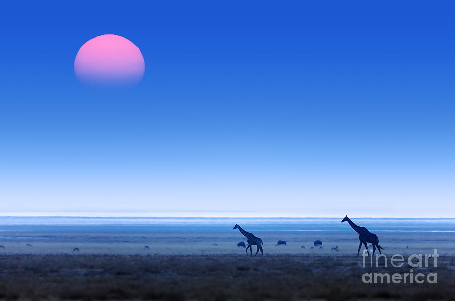 Pans Photograph - Giraffes Giraffa Camelopardalis Walking by Johan Swanepoel