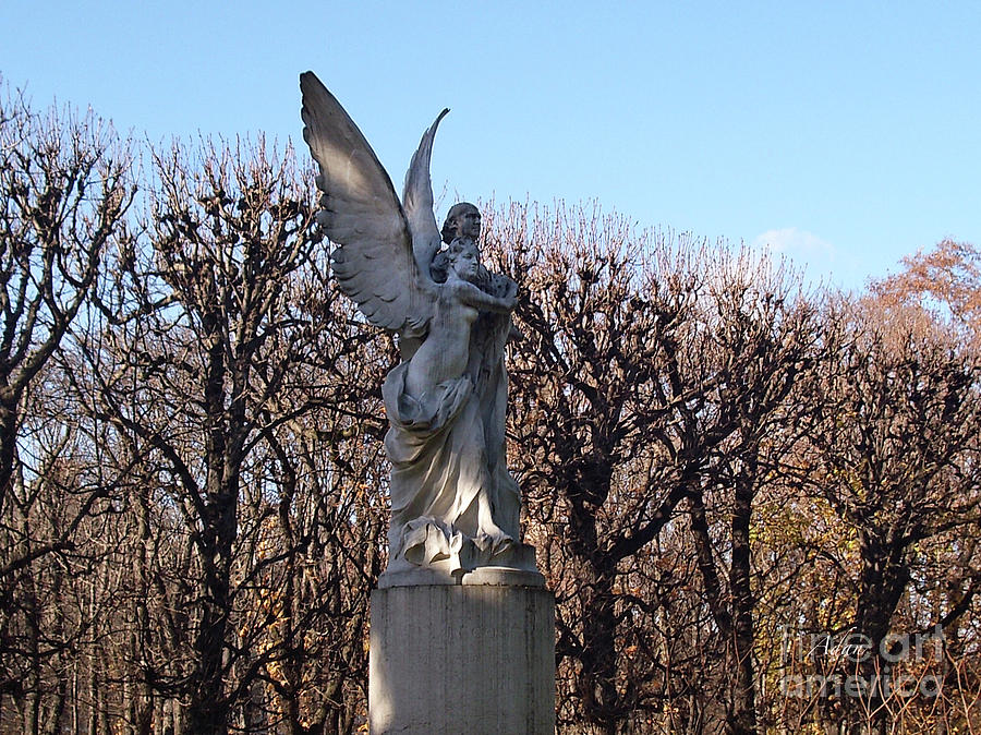 Girded By Trees, Light And An Angel Photograph