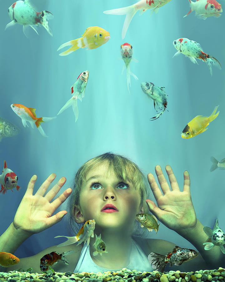 Girl 4-6 Looking At Fish In Tank, Hands by Gandee Vasan