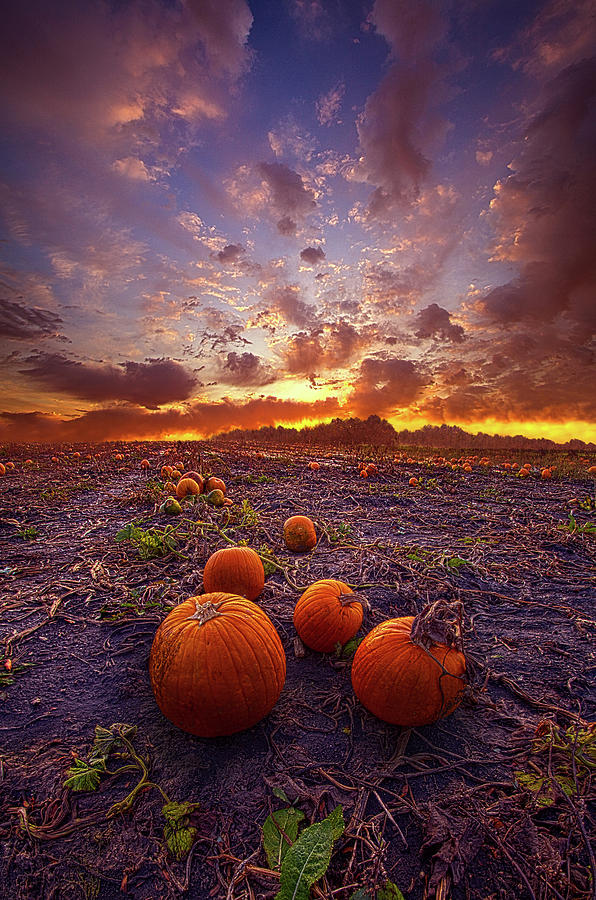 Give Them Pumpkin To Talk About by Phil Koch