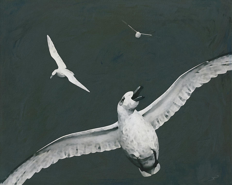 Glacious Seagulls in the sky by Jan Keteleer