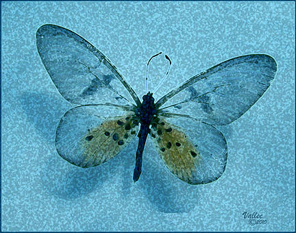 Glass Wing by Vallee Johnson