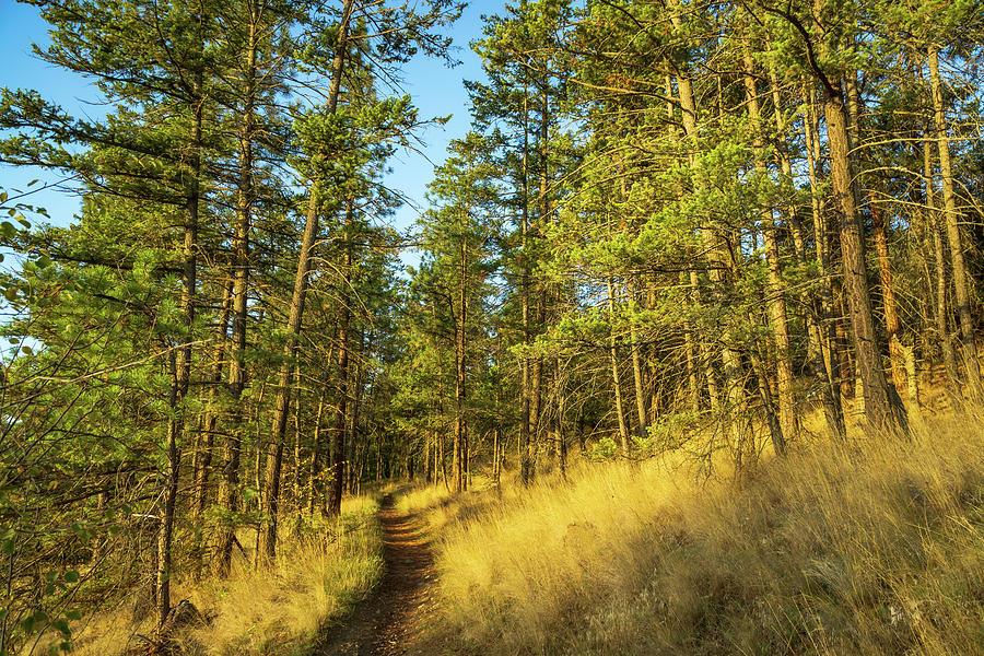 Glenmore Highlands Trail by Dave Matchett