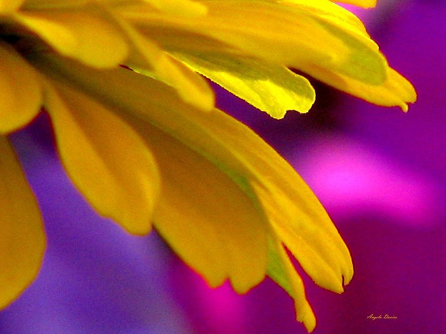 Glimmering by Angela Davies