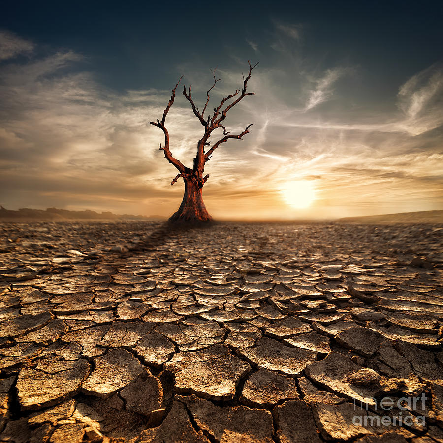 Pollution Photograph - Global Warming Concept. Lonely Dead by Perfect Lazybones