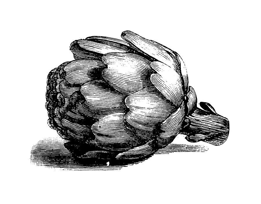 Globe Artichoke   Antique Culinary Digital Art by Nicoolay