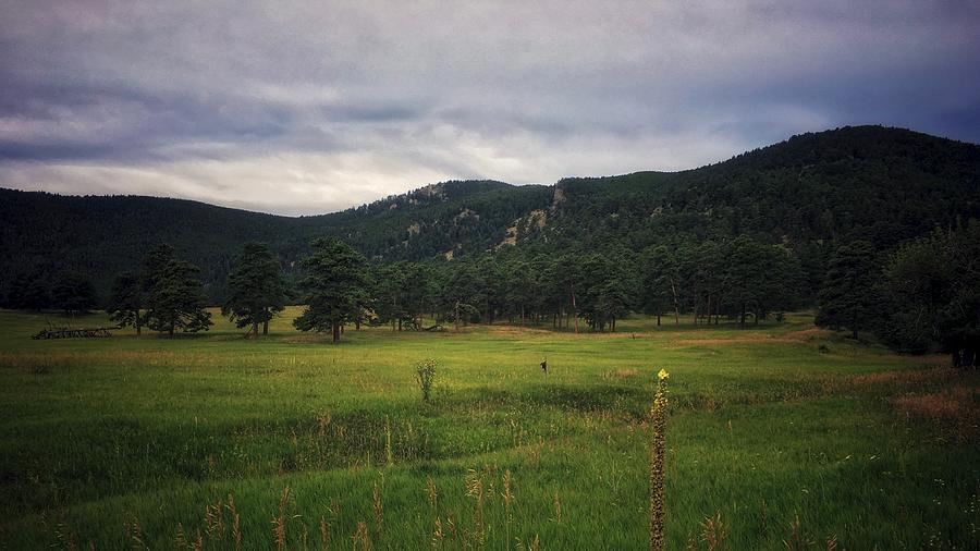 Gloomy Meadow by Dan Miller