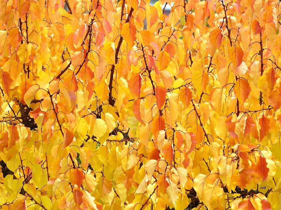 Glorious Fall Apricot Leaves by Will Borden