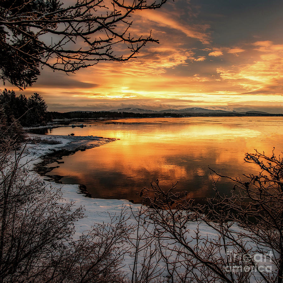 Glorious Golds by Susan Garver